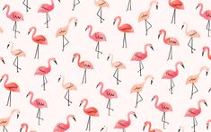 JenBPeters_Flamingos.jpg (1856×1161)