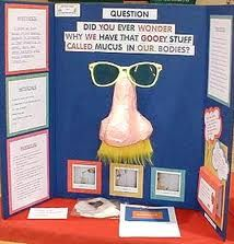 Best Science Fair Boards Images On Pinterest Experiment - Unique science fair tri fold ideas