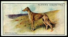 Cigarette Card - Greyhound