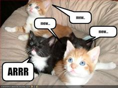 Pirate lolcat. If I had a cat this would so totally be mine! lol