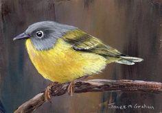 """Daily Paintworks - """"Nashville Warbler ACEO"""" - Original Fine Art for Sale - © Janet Graham"""