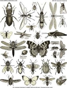 For Your Info: How many insects are there on Earth?