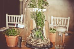 just had to share the wedding of Andrea & Luke at her family's farm netherwood in the natal midlands photographed by my pal Shanna. Terrarium Centerpiece, Flower Centerpieces, The Long Dark, Miss Moss, Botanical Decor, Table Arrangements, Paper Lanterns, Flower Bouquet Wedding, Plants