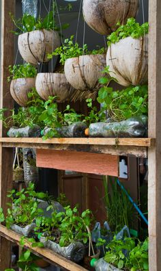 Great recycled sustainable garden - planters made from plastic bottles and recycled wood.