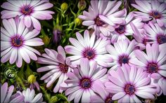 Flowers by kingrazz12 #nature #mothernature #travel #traveling #vacation #visiting #trip #holiday #tourism #tourist #photooftheday #amazing #picoftheday