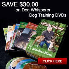 Go to CatnipnBones.com to save $30 on Cesar's dog training program.