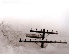 Bill Brinkman:   In Upper Michigan's Storm of the Century in 1938, some snow drifts reached the level of utility poles.