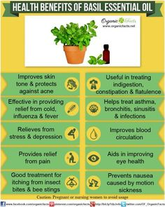 The health benefits of basil essential oil include its ability to treat nausea, motion sickness, indigestion, constipation, respiratory problems, diabetes, etc. Basil oil is also a good source o...
