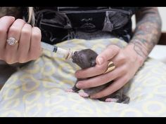 How to Syringe Feed a Newborn Kitten - YouTube