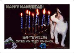 Holiday pet safety. Hanukkah candles...