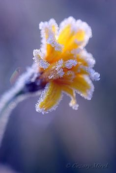 decorated with frost,... by Cezary Mirek on 500px