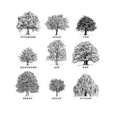 I Love Trees Oak Tree Drawings Sketches Drawing Art