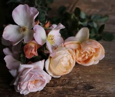 'Sally Holmes' is pictured here with two other David Austin roses—the apricot chalice-shaped 'Jude the Obscure' and pale pink 'Wild Eve'. Jude The Obscure, Rose Pictures, David Austin Roses, Single Rose, Rose Bush, The Little Prince, Beautiful Roses, A Boutique, Amazing Gardens