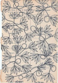 Archival print of a drawing on the page of a vintage botany book. Jennifer Judd-Mcgee