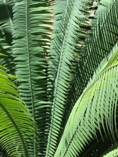Palm fronds in Reef gardens