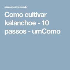 Como cultivar kalanchoe - 10 passos - umComo