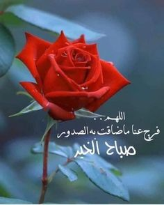 Happy Birthday Pictures, Morning Wish, Islamic Pictures, Morning Images, Arabic Quotes, Rose, Flowers, Plants, Pink