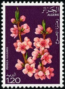 Stamp: Peach (Algeria) (Flowering trees) Mi:DZ 719,Sn:DZ 608,Yt:DZ 680