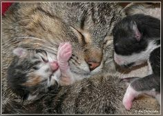 Itty bitty kitties with momma