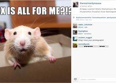 Marty, o rato, é o único bicho que você precisa seguir no Instagram - http://epoca.globo.com/colunas-e-blogs/bombou-na-web/noticia/2014/09/bmartyb-o-rato-e-o-unico-bicho-que-voce-precisa-seguir-no-instagram.html