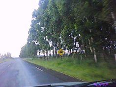 Viagens - Interior de Minas Gerais - Estrada
