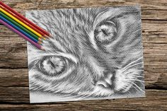 Cat Face coloring book pages adult coloring by ArtistrybyLisaMarie #AdultColoring #ColoringPage #GiftsForGirls