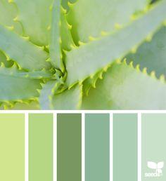 Succulent Hues via @designseeds