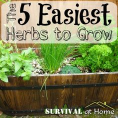 The 5 Easiest Herbs to Grow (via Survival at Home)