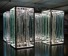 Anthony James, untitled sculpture of birch tree sections in mirror boxes, 2008