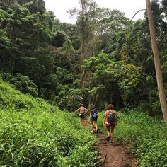 That moment when you are trekking through the gorgeous #Oahu #rainforest, covered in #mud, looking for #MaunawiliFalls and you realize: #LuckyWeLiveHawaii!!!