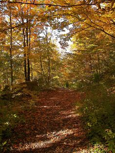Hiking along the Bruce Trail, Dundas, Ontario. BEEN THERE. DONE THAT  :)