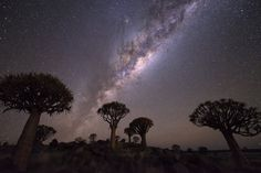 Quiver Tree Forest , Namibia. Photo: Conor MacNeill/ Flickr
