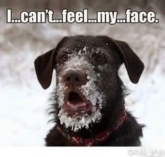 funny frozen sayings   ... - Funny Dogs) - Funny pictures - Funny fail photos - Funny quotes