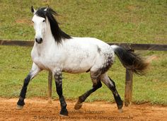 warmblood horse - Google Search