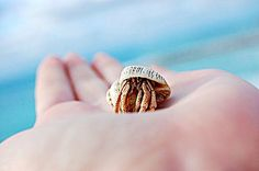 Hermit crab--had them before but would love to have them again