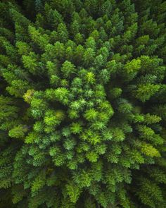 Here's a new photo taken with my @djiglobal Phantom 3 above a lush forest in Washington. by shainblumphotography