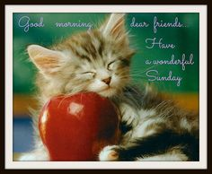 Good Morning Have A Wonderful Sunday good morning sunday sunday quotes happy sunday sunday quote happy sunday quotes Kittens Cutest, Cats And Kittens, Cute Cats, Funny Cats, Funny Animals, Cute Animals, Cats Humor, Good Morning Dear Friend, Good Morning Funny