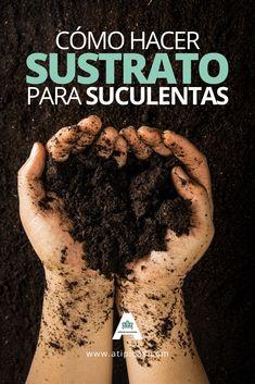 Cómo hacer sustrato casero para suculentas How to make a substrate for succulents. Eco Garden, Bonsai Garden, Green Garden, Green Plants, Garden Planters, Planting Succulents, Garden Cactus, Succulent Plants, Succulent Landscaping