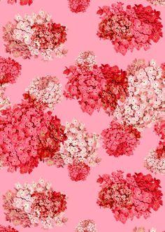 pattern | hydrangea