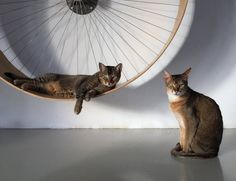 Give your kitty a perfect playtime activity by installing one of these Cat Wall Wheels in your room.