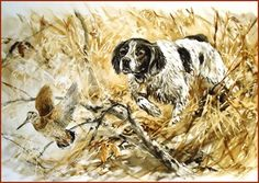 epagneul breton watercolor print by valery siurha french brittany spaniel brittany spaniel art. Black Bedroom Furniture Sets. Home Design Ideas