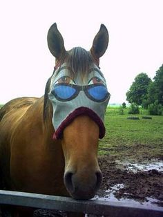 Funny Horse Pictures 2011 | Funny Animals