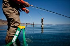 Image from http://static01.nyt.com/images/2013/04/24/us/TROUT/TROUT-articleLarge.jpg.