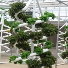 "Hydroponics Gardening Tips Hydroponics was derived from the Greek word hydro, which means ""water"" and ponos, which means ""labor or water-working""."