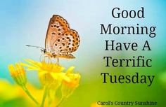 Here we have 15 Good Morning Happy Tuesday quotes to start your Tuesday morning. Wish your friends and family a great Tuesday and help get their day started off right with one of these Tuesday image quotes. Good Morning Tuesday Images, Good Morning Sunshine, Tuesday Morning, Good Morning Good Night, Good Morning Quotes, Morning Sayings, Have Good Day, Have A Happy Day, Happy Weekend