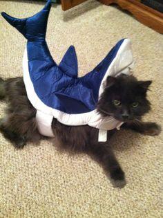 Dutch was a Shark at heart! Shark Humor, Worcester, Sharks, Baby Car Seats, Bean Bag Chair, Hockey, Dutch, Children, Cats