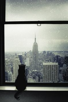 Cats I like to travel blog with: Cats in the City