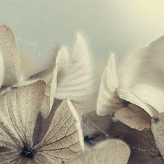 #whimsical #romantic  #soft light #aquietrevolution