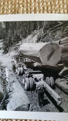 Niel CaffeyOld Logging Pictures