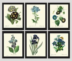Botanical PRINT SET of 6 Art Redoute 123 Beautiful Blue Flowers Iris Butterfly Antique Illustration to Frame Home Wall Decoration to Frame